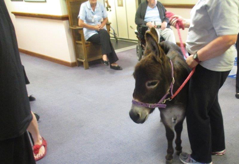 Donkey visit Dorrington House Watton.