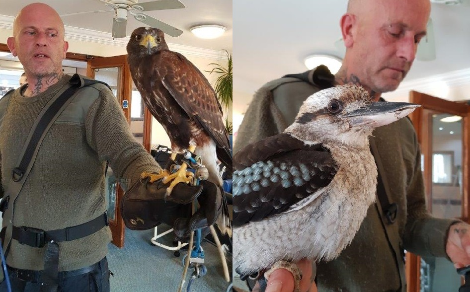 Birds of Prey visit Dorrington House Wells! Here we have a Harris Hawk (Left) and an Australian Kookaburra (Right).
